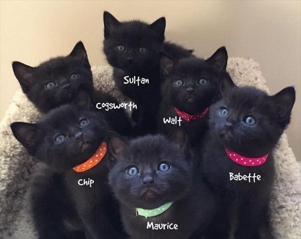 黒猫の魅力届け10
