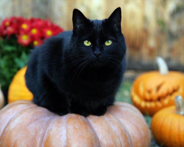 黒猫の魅力届け7