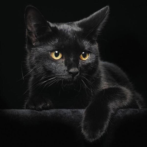 黒猫の魅力届け14