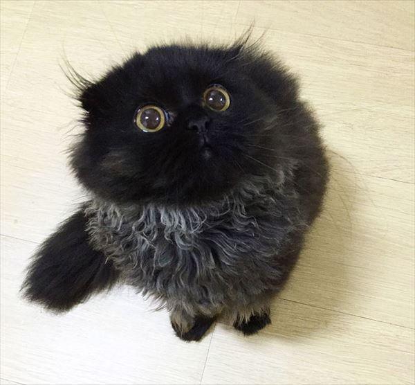 黒猫の魅力届け3