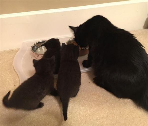 黒猫の魅力届け19