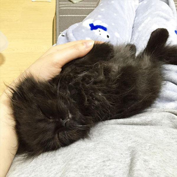 黒猫の魅力届け2