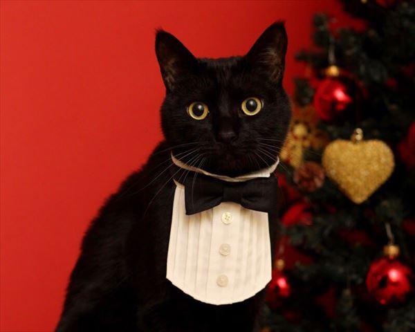黒猫の魅力届け9