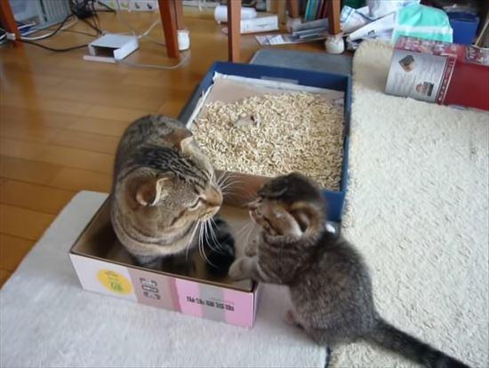 ゆっくりしたいパパ猫と遊んで欲しい子猫の親子喧嘩 10