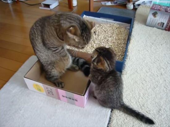 ゆっくりしたいパパ猫と遊んで欲しい子猫の親子喧嘩 5