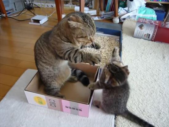ゆっくりしたいパパ猫と遊んで欲しい子猫の親子喧嘩 6