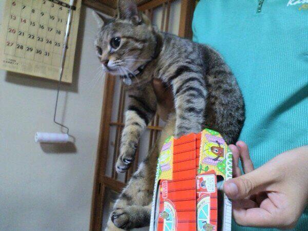 面白い悲報 猫