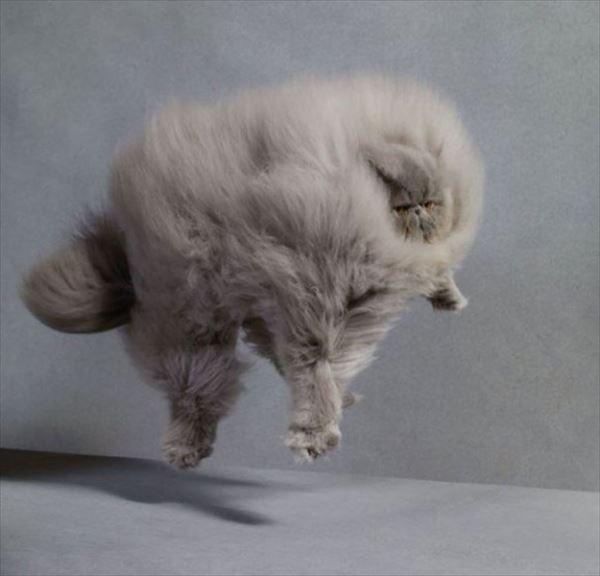 モフモフしたくなる猫の写真や動画2