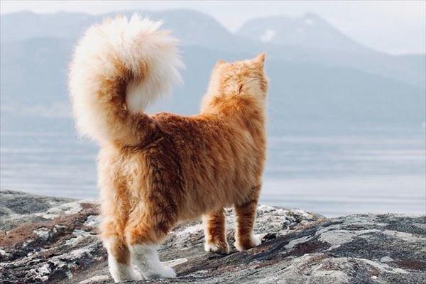 モフモフしたくなる猫の写真や動画20