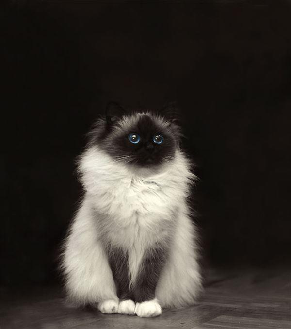 モフモフしたくなる猫の写真や動画12