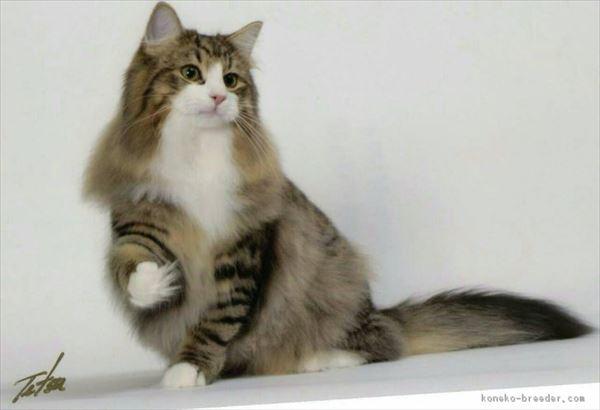 モフモフしたくなる猫の写真や動画19