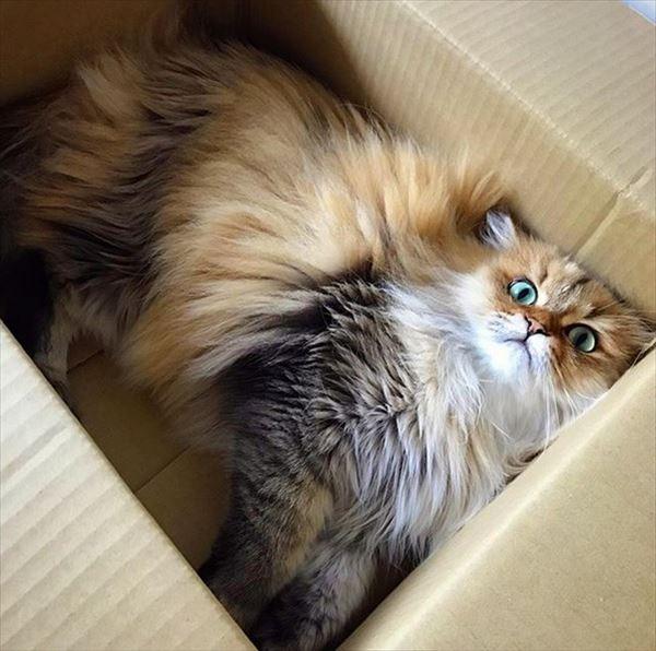 モフモフしたくなる猫の写真や動画10