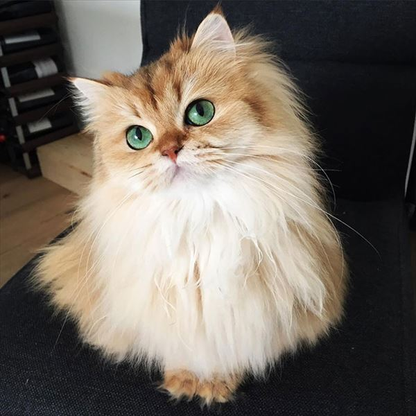 モフモフしたくなる猫の写真や動画21