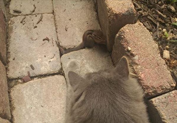 猫とシマリス友達に 写真1