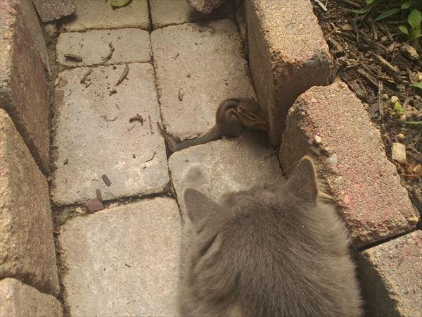 猫とシマリス友達に 写真2