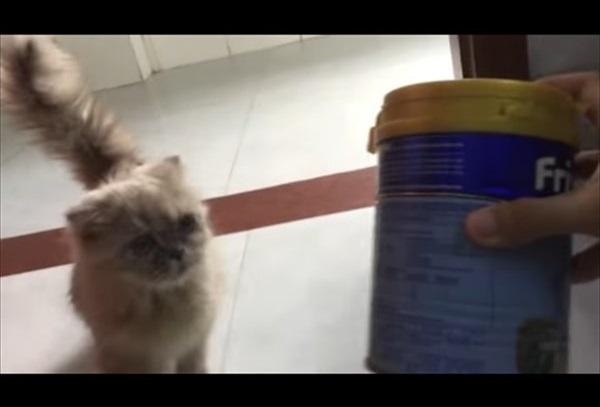 「早すぎて笑った!」猫缶の音に飛んで来る猫さん