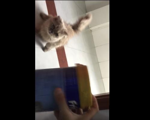 猫缶の音に飛んで来る猫さん3
