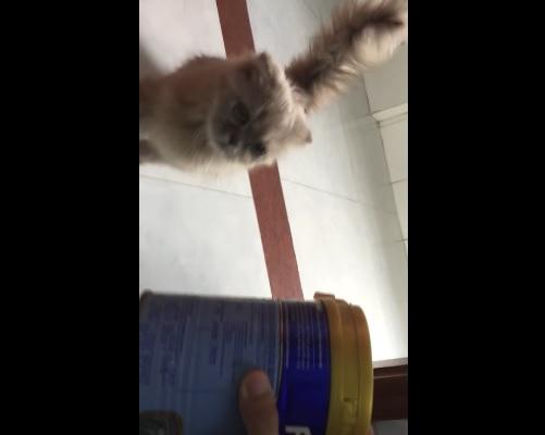 猫缶の音に飛んで来る猫さん4