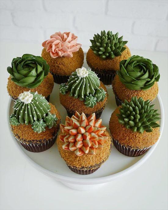 ぷくぷく可愛い 多肉植物ケーキ 写真16