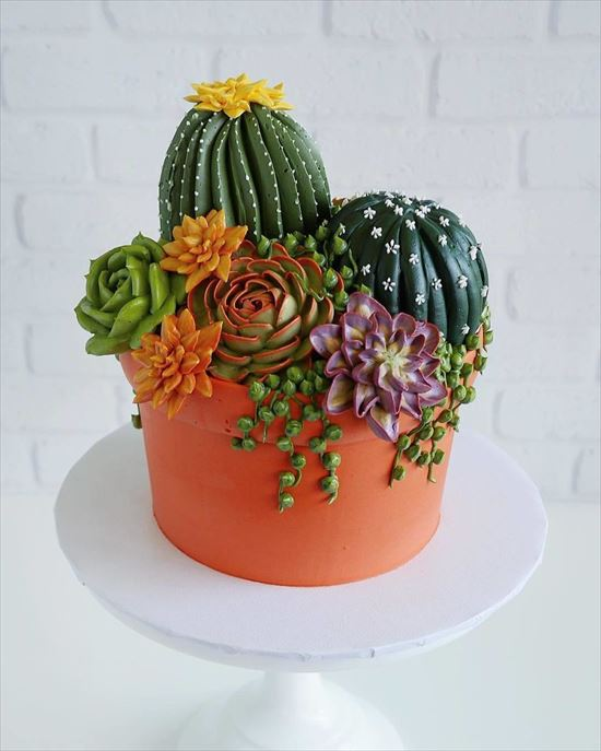 ぷくぷく可愛い 多肉植物ケーキ 写真2