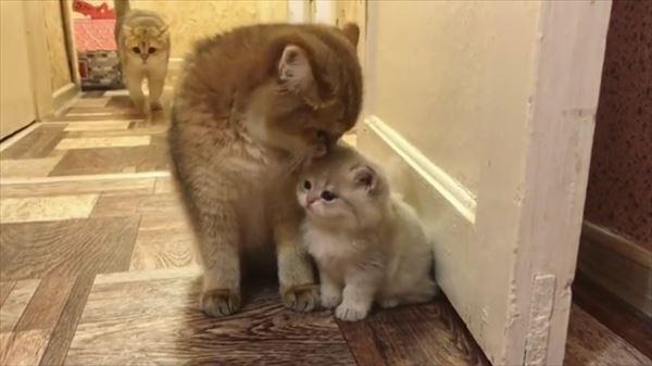 ママの取り合いをする可愛い子猫たち 画像2