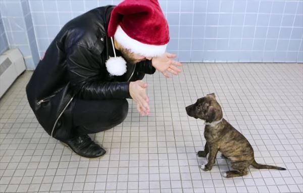 手品を見た犬たちの動画が話題に。そこには保護施設のある思いがあった