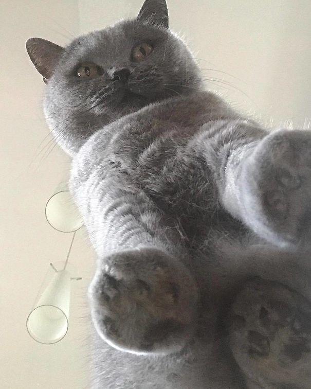 ガラステーブルの下から撮影 猫写真22