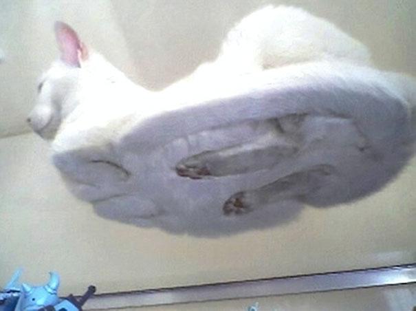 ガラステーブルの下から撮影 猫写真7