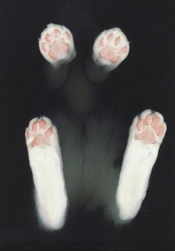 ガラステーブルの下から撮影 猫写真8