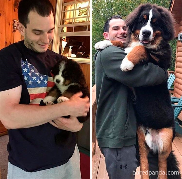 飼い主とともに育ってきた愛犬たちのビフォーアフター写真12
