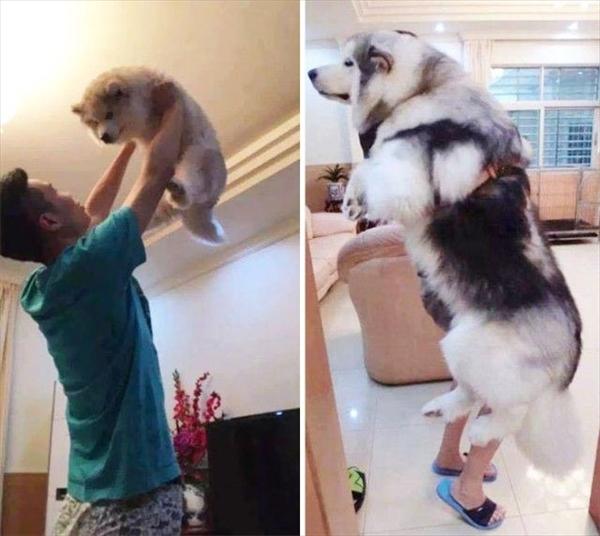 飼い主とともに育ってきた愛犬たちのビフォーアフター写真13