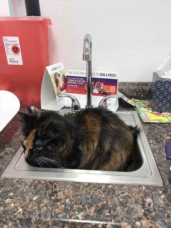 動物病院が嫌いな猫 写真6