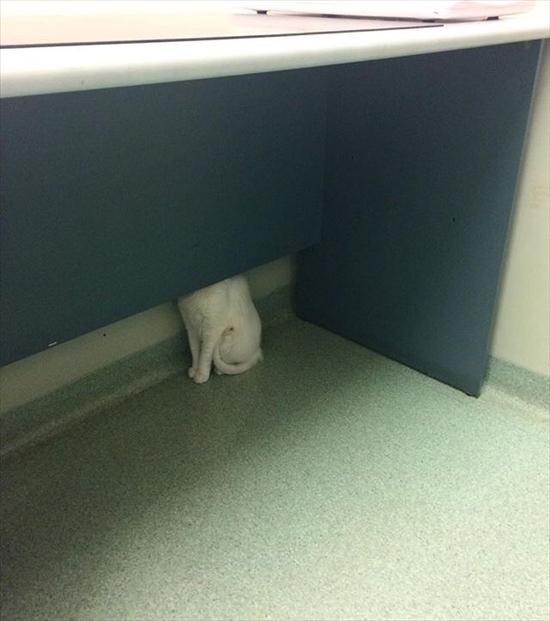 動物病院が嫌いな猫 写真10