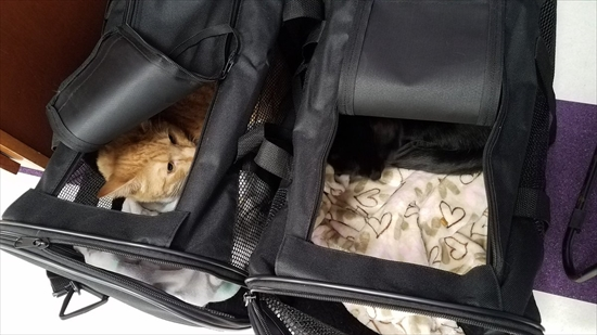 動物病院が嫌いな猫 写真9