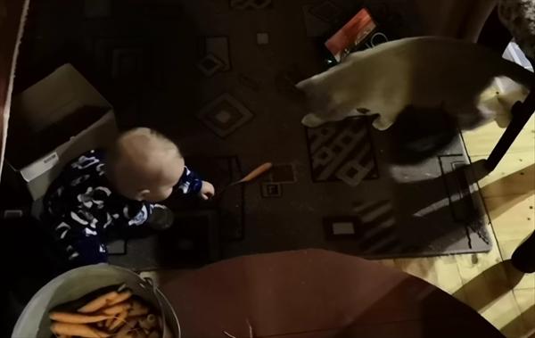 赤ちゃんに手を差し伸べる猫 1