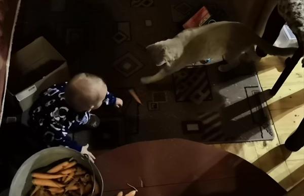 赤ちゃんに手を差し伸べる猫 3