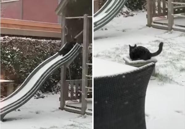 降りしきる雪の中、滑り台で楽しそうに遊ぶ黒猫さん
