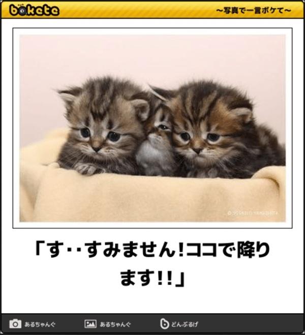 笑える猫の画像でボケて! 10