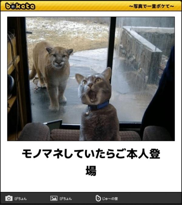 笑える猫の画像でボケて! 13