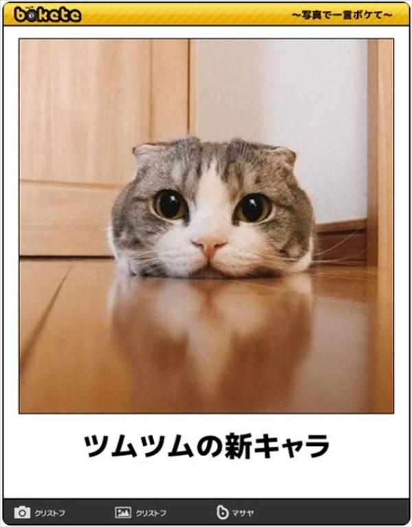 笑える猫の画像でボケて! 12