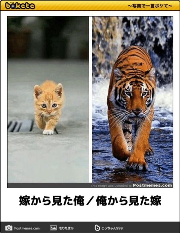 笑える猫の画像でボケて! 6