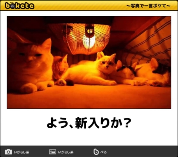 笑える猫の画像でボケて! 2