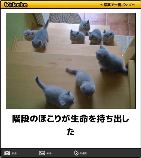 笑える猫の画像でボケて! 3