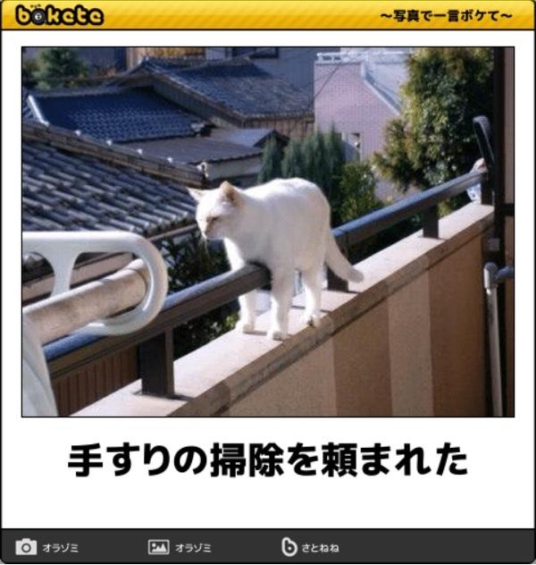 笑える猫の画像でボケて! 7