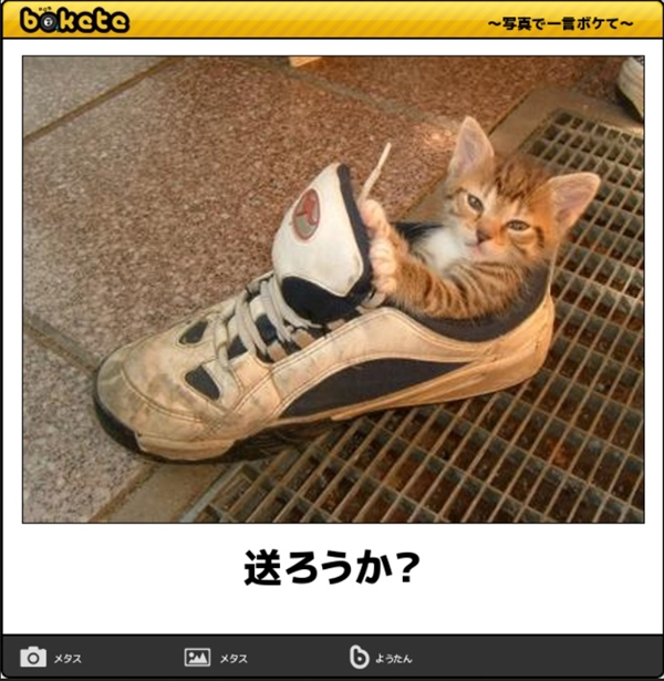 笑える猫の画像でボケて! 9