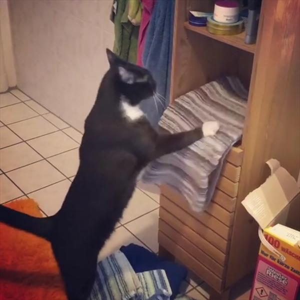 棚からタオルを落とす猫→自分の寝床を作ってた 2
