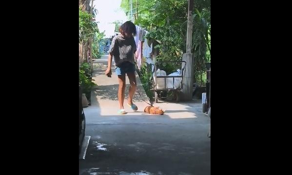 お散歩から帰りたくない猫の抵抗 画像1