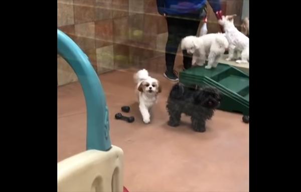ペットホテルに愛犬を迎えに行ったら・・・悶絶級に可愛すぎる瞬間が撮れた! 画像1