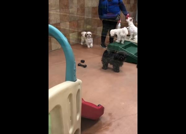 ペットホテルに愛犬を迎えに行ったら・・・悶絶級に可愛すぎる瞬間が撮れた! 画像2