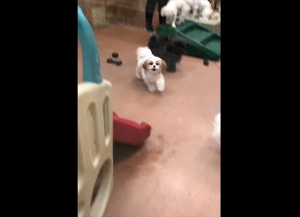 ペットホテルに愛犬を迎えに行ったら・・・悶絶級に可愛すぎる瞬間が撮れた! 画像3